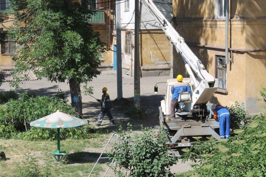 В Кривом Роге продолжают «омолаживать» деревья и садить кусты роз (ФОТО) (фото) - фото 1