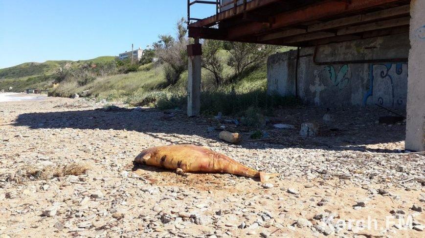 Крымские пляжи утопают в мусоре. Власти республики получают массу жалоб от жителей и гостей полуострова (ФОТО), фото-9