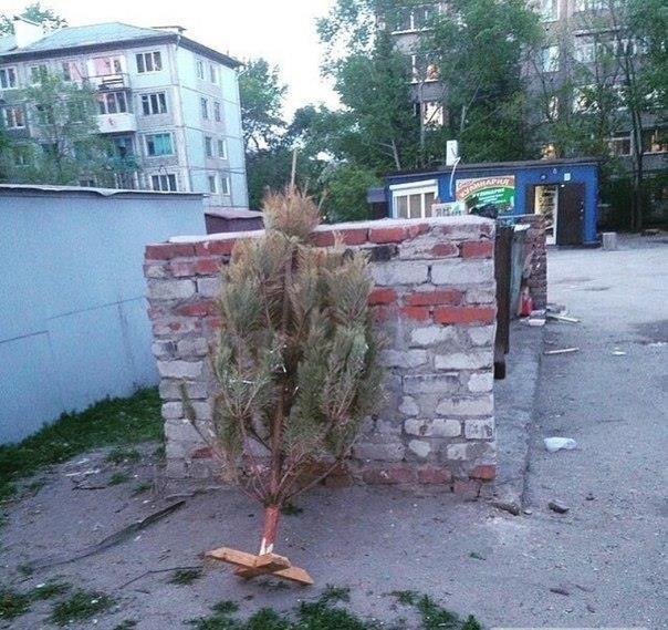 Фотофакт: одессит 9 июня вынес новогоднюю елку (фото) - фото 1