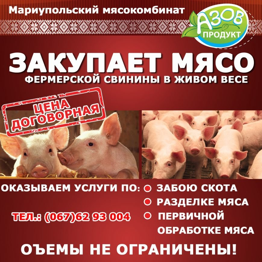 свиньи1