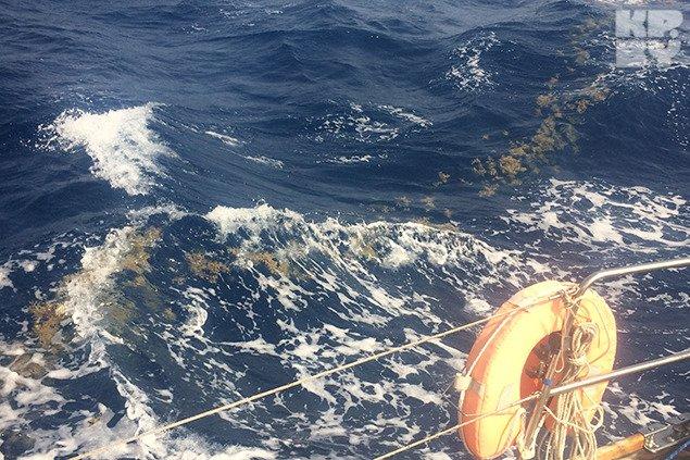 Гродненец отправился автостопом через Антлантический океан (фото) - фото 1