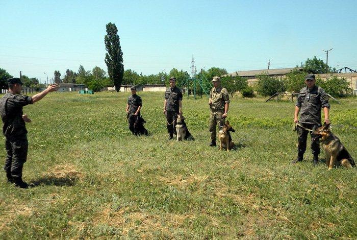 В криворожской  бригаде Нацгвардии прошли переподготовку  кинологи  (ФОТО), фото-2