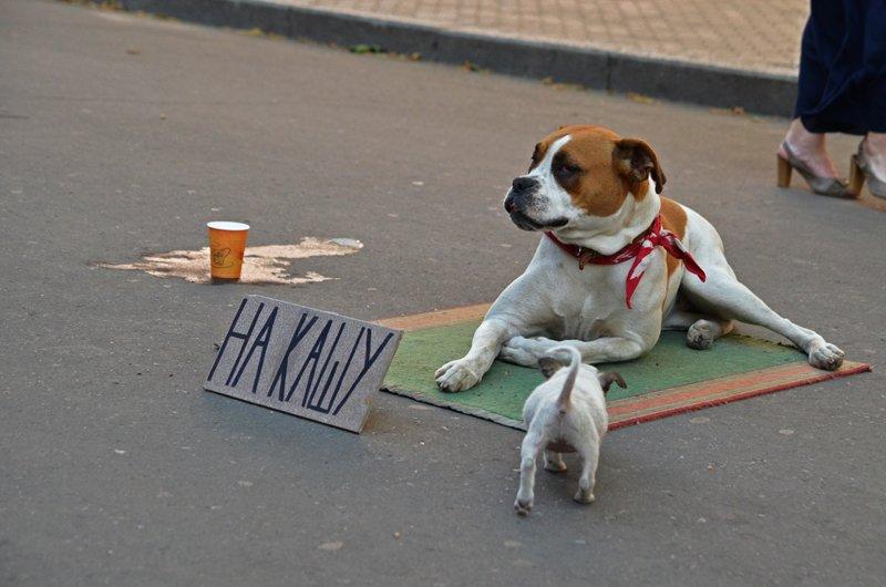 У известной в Николаеве собаки-попрошайки появился друг (ФОТОФАКТ), фото-3