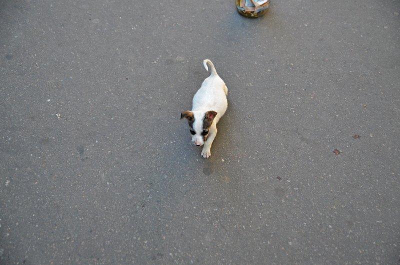 У известной в Николаеве собаки-попрошайки появился друг (ФОТОФАКТ), фото-2