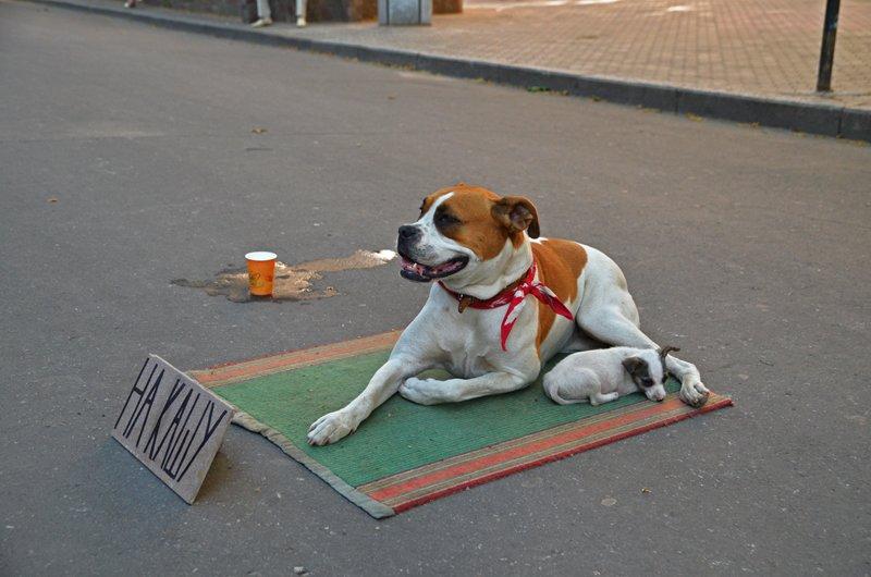 У известной в Николаеве собаки-попрошайки появился друг (ФОТОФАКТ), фото-4