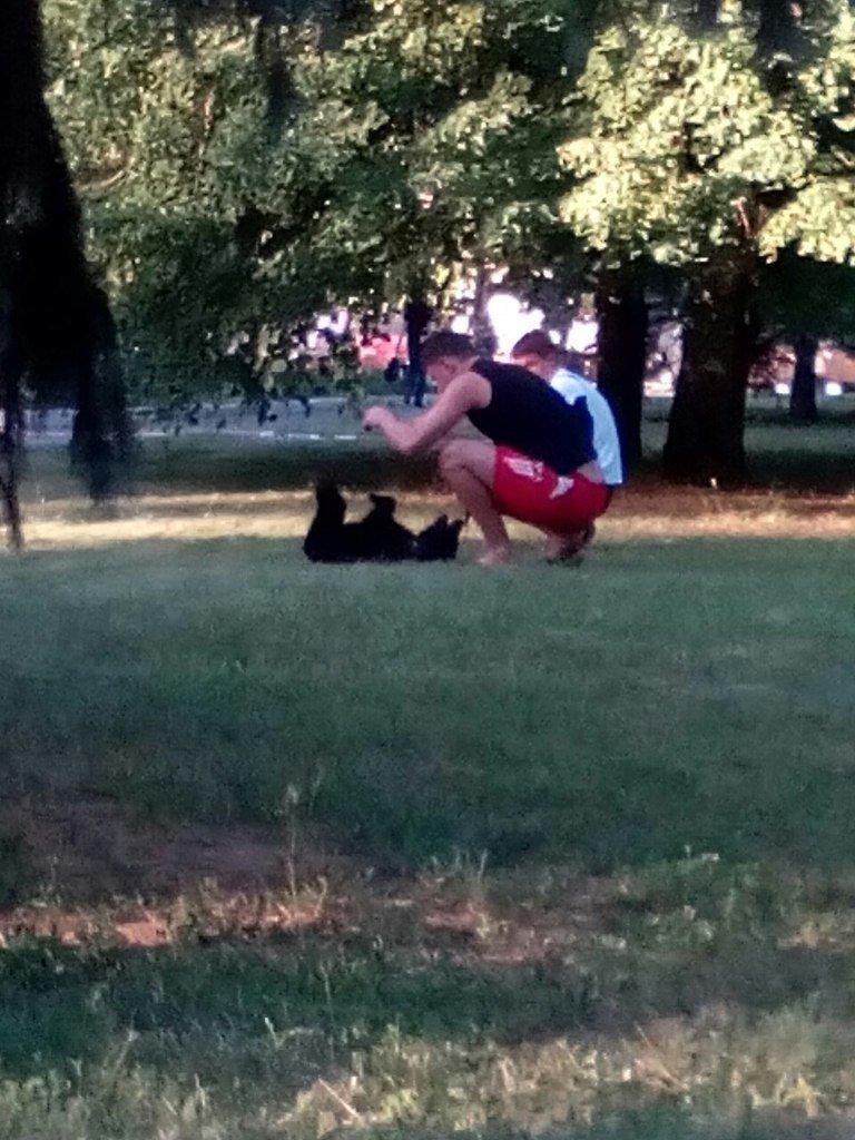 Криворожане обнаружили в городском сквере медведя (ФОТО) (фото) - фото 1