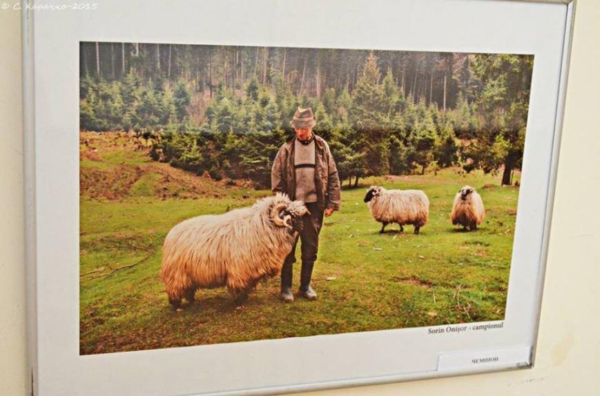 У Чернівцях свої світлини презентувати румунські фотографи (ФОТО) (фото) - фото 5
