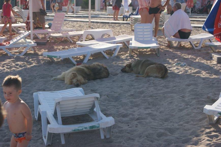 Пляжный контроль в Одессе: Лузановка (ФОТОРЕПОРТАЖ) (фото) - фото 4