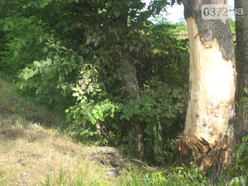 У Ленківцях сталося ДТП зі смертельним результатом (фото) - фото 1