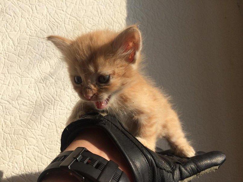 «Азовцы» порсят приютить котят из Широкино (ВИДЕО+ФОТО) (фото) - фото 1