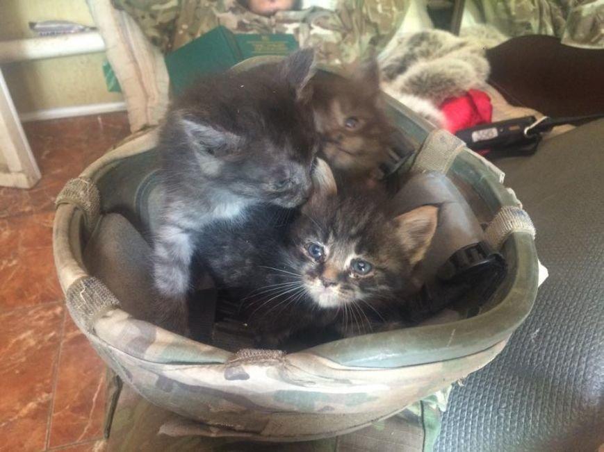 «Азовцы» просят приютить котят из Широкино (ВИДЕО+ФОТО) (фото) - фото 1