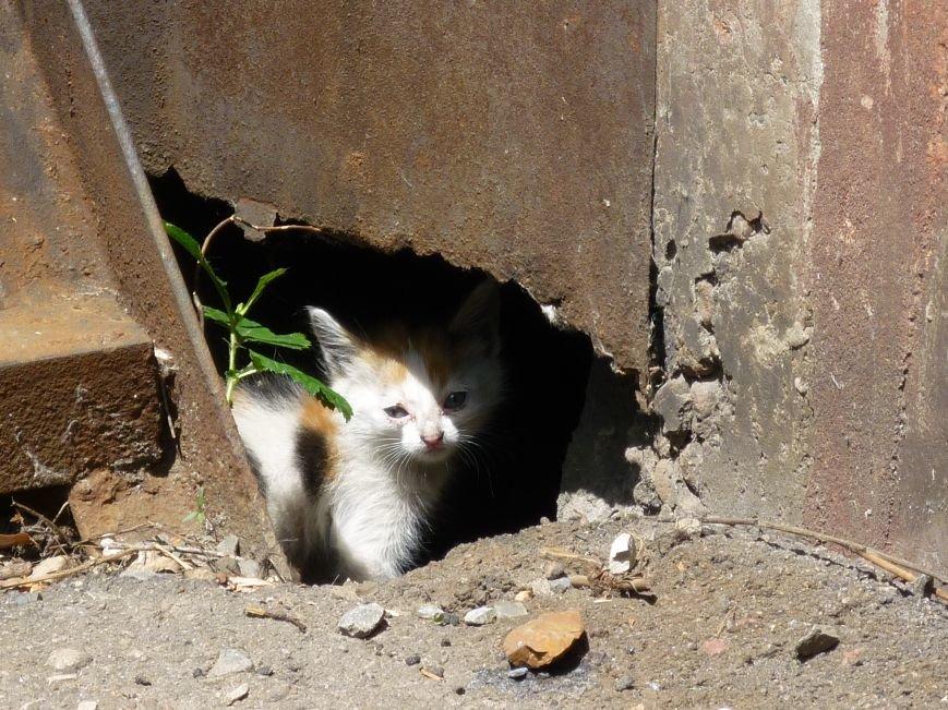 Решится ли вопрос с бездомными животными в Красноармейске? (фото) - фото 1