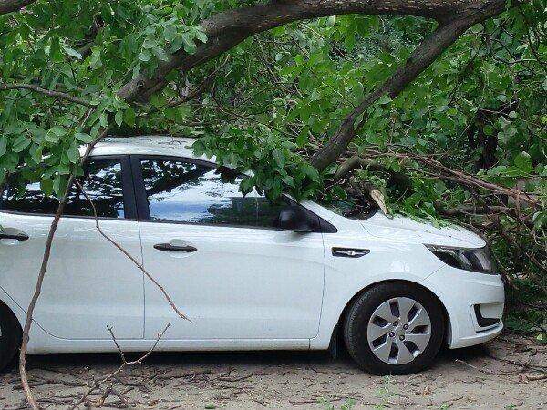 В Запорожье дерево упало на припаркованное авто (ФОТОФАКТ) (фото) - фото 1