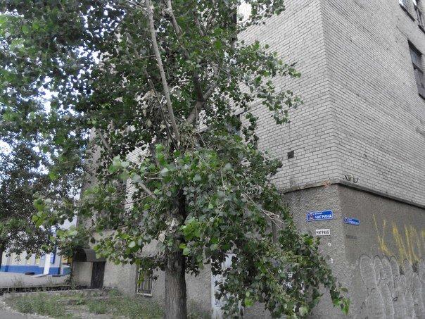 В Николаеве демонтировали борд (фото) - фото 5