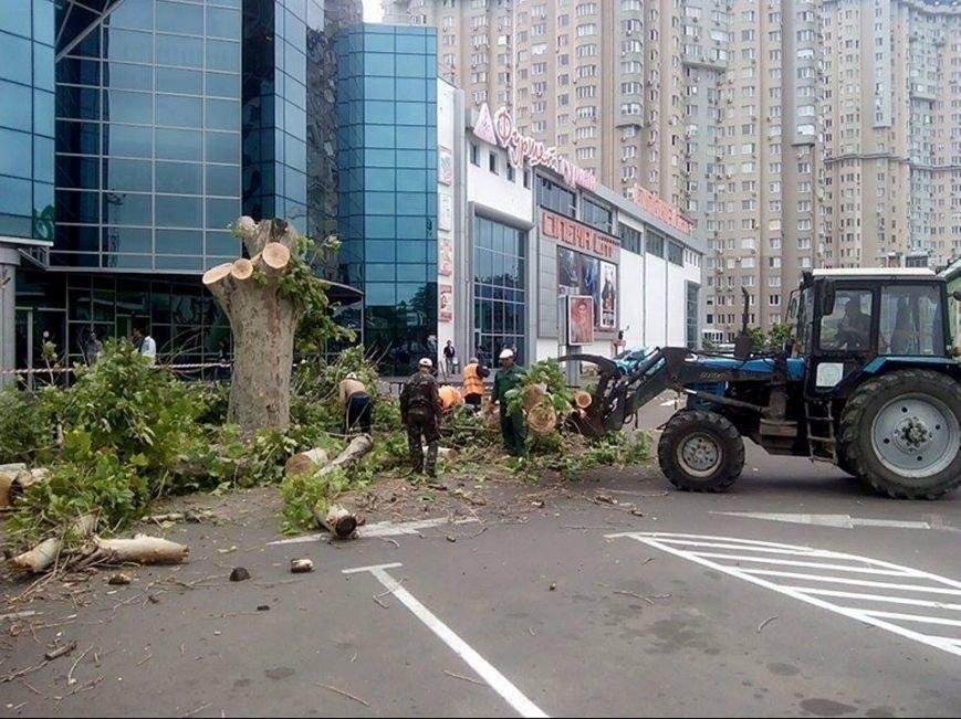 Около одесского торгового центра спилили единственный платан (ФОТО) (фото) - фото 1