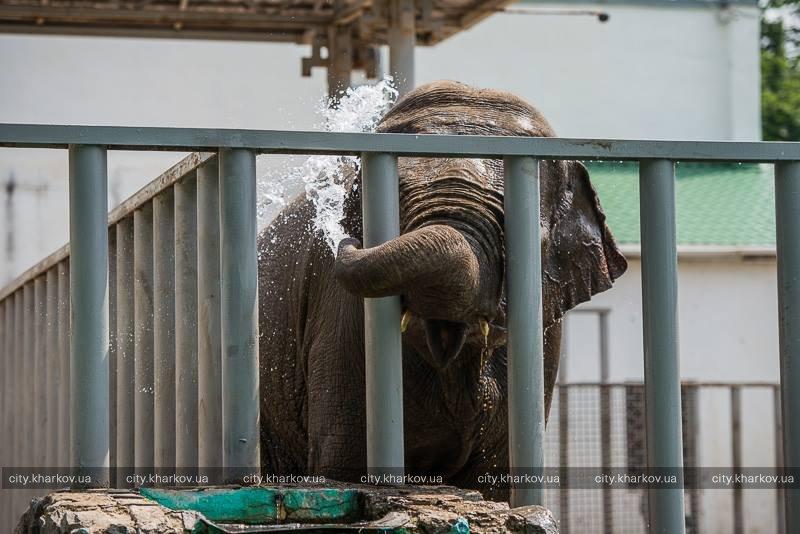 В Харьковском зоопарке отметили День слонов (ФОТО) (фото) - фото 1