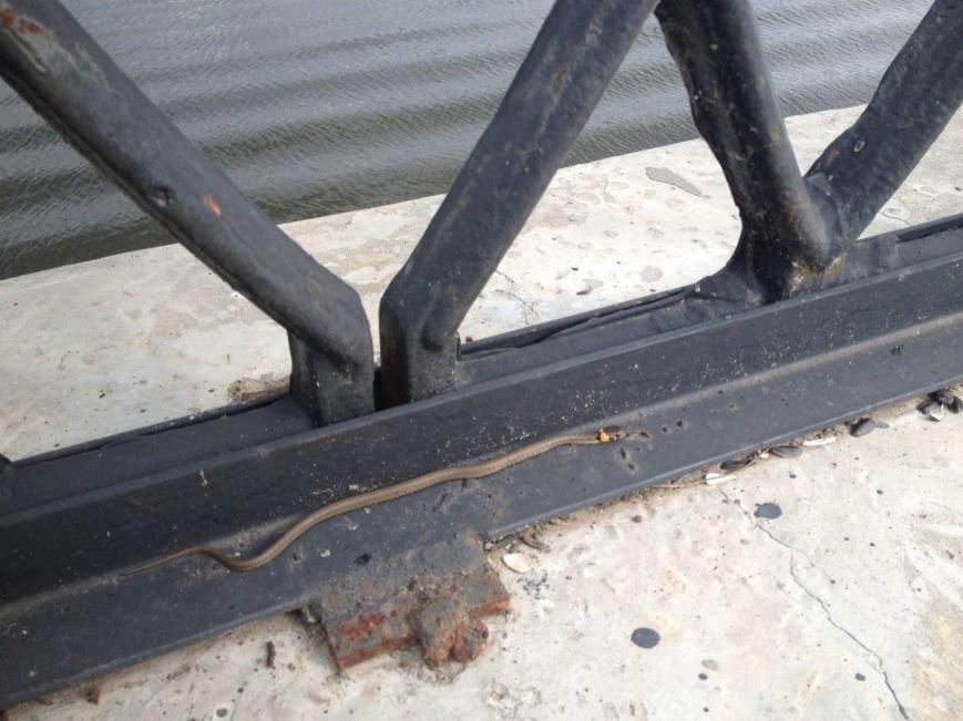 ФОТОФАКТ: В гомельском парке замечена змея (фото) - фото 1