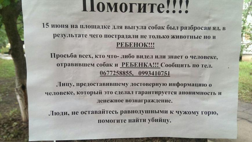 На Алексеевке прямо на площадке для выгула собак отравили животных: пострадал и ребенок (фото) - фото 1