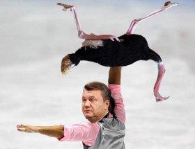 yanukovich-i-strausy-socseti-vzorvalis-perlami-yanukovicha-foto_6216