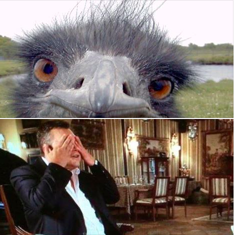 Беглый президент-страусфил взорвал соцсети (ФОТО) (фото) - фото 1