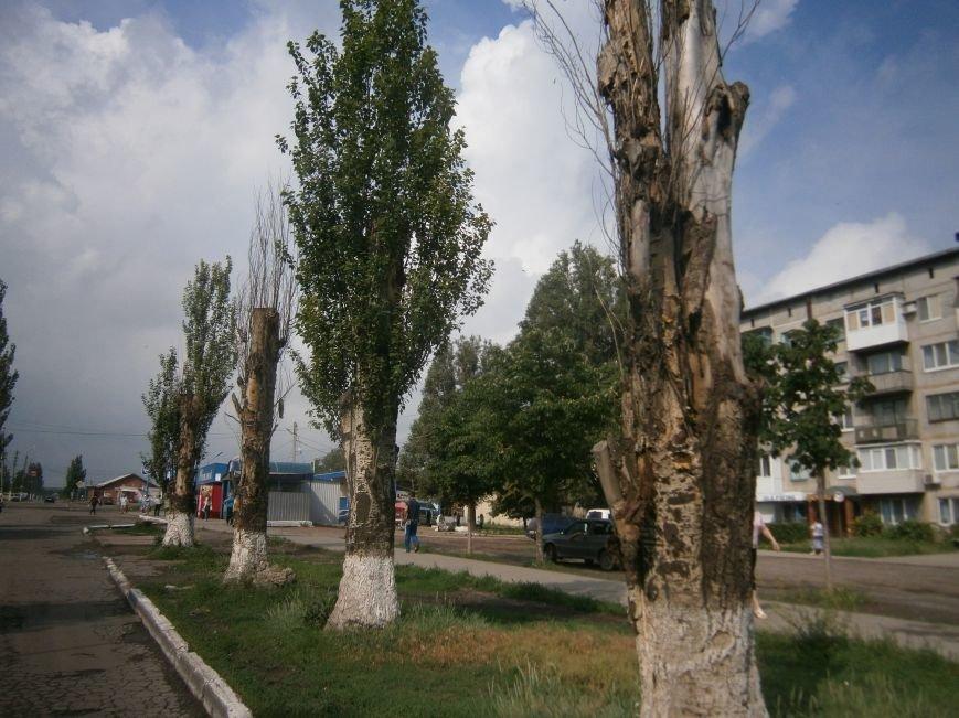 «Омоложение» деревьев по-димитровски – беспощадное (фото) - фото 15