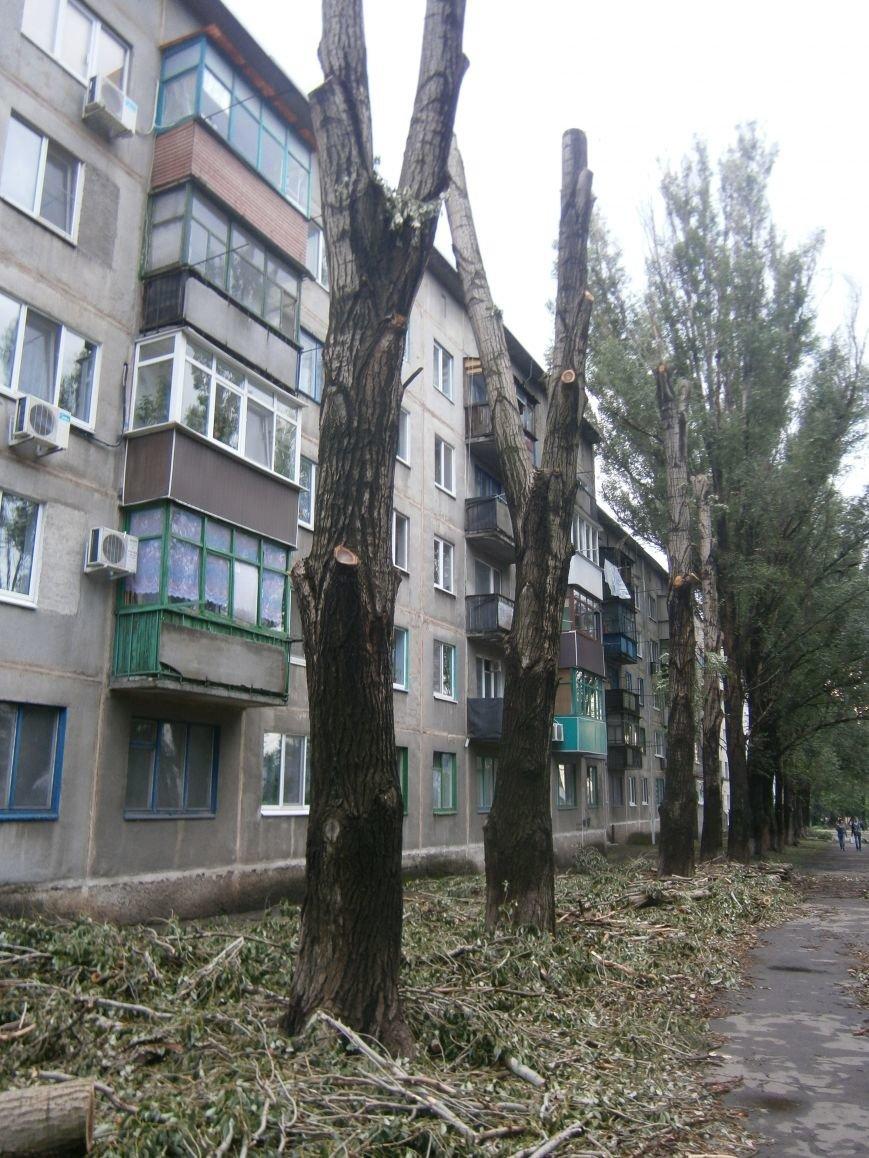 «Омоложение» деревьев по-димитровски – беспощадное (фото) - фото 7