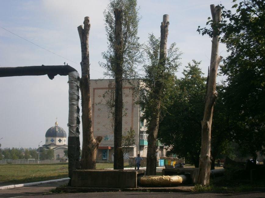 «Омоложение» деревьев по-димитровски – беспощадное (фото) - фото 10