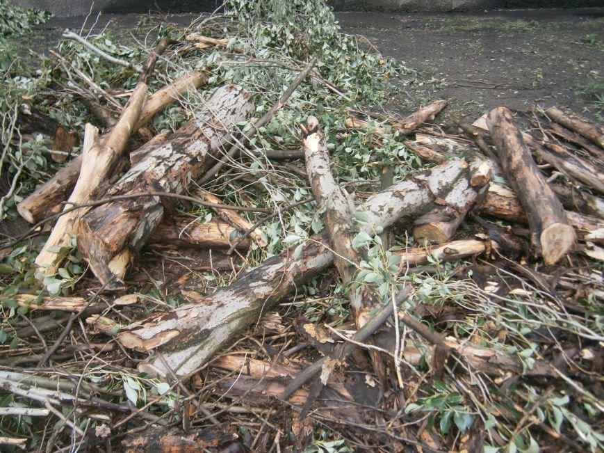 «Омоложение» деревьев по-димитровски – беспощадное (фото) - фото 18