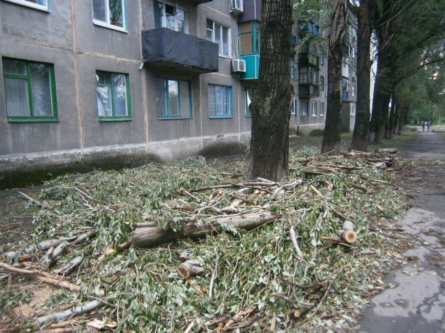 «Омоложение» деревьев по-димитровски – беспощадное (фото) - фото 9