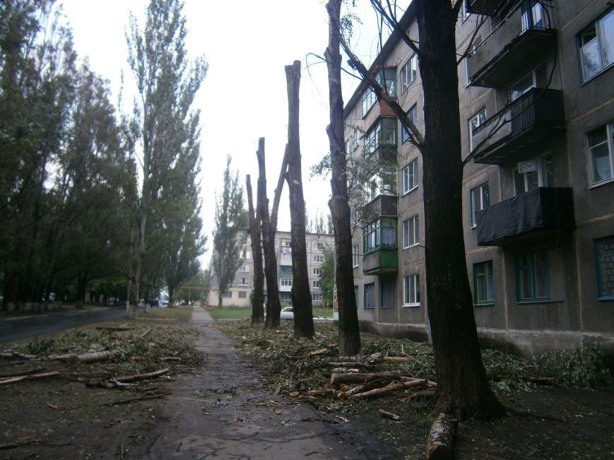 «Омоложение» деревьев по-димитровски – беспощадное (фото) - фото 5