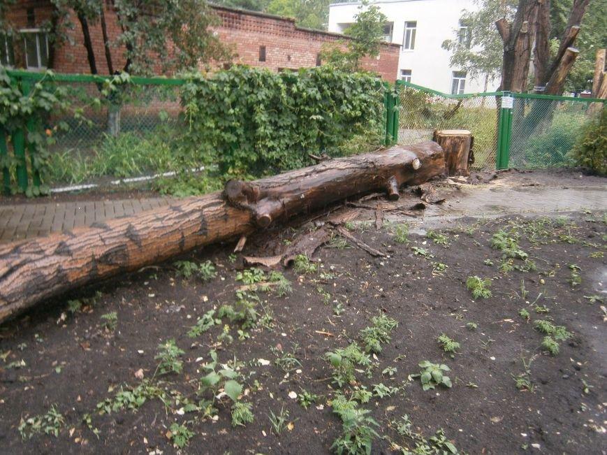 «Омоложение» деревьев по-димитровски – беспощадное (фото) - фото 16