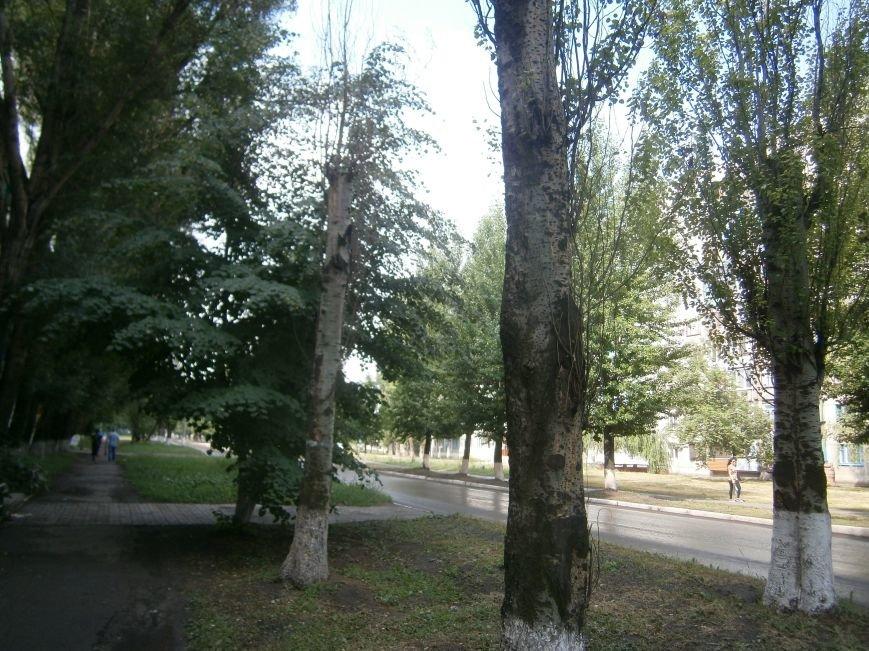 «Омоложение» деревьев по-димитровски – беспощадное (фото) - фото 11
