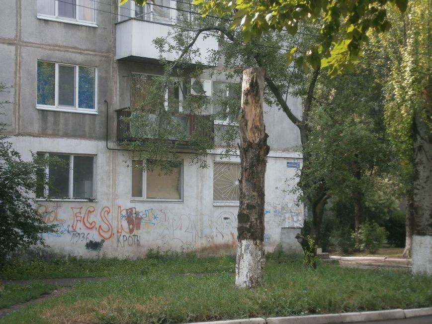 «Омоложение» деревьев по-димитровски – беспощадное (фото) - фото 12