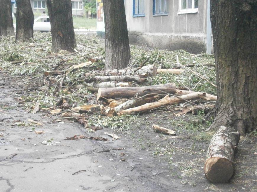 «Омоложение» деревьев по-димитровски – беспощадное (фото) - фото 6