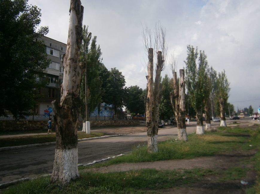 «Омоложение» деревьев по-димитровски – беспощадное (фото) - фото 13