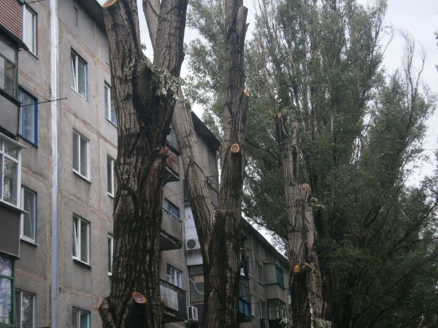 «Омоложение» деревьев по-димитровски – беспощадное (фото) - фото 8