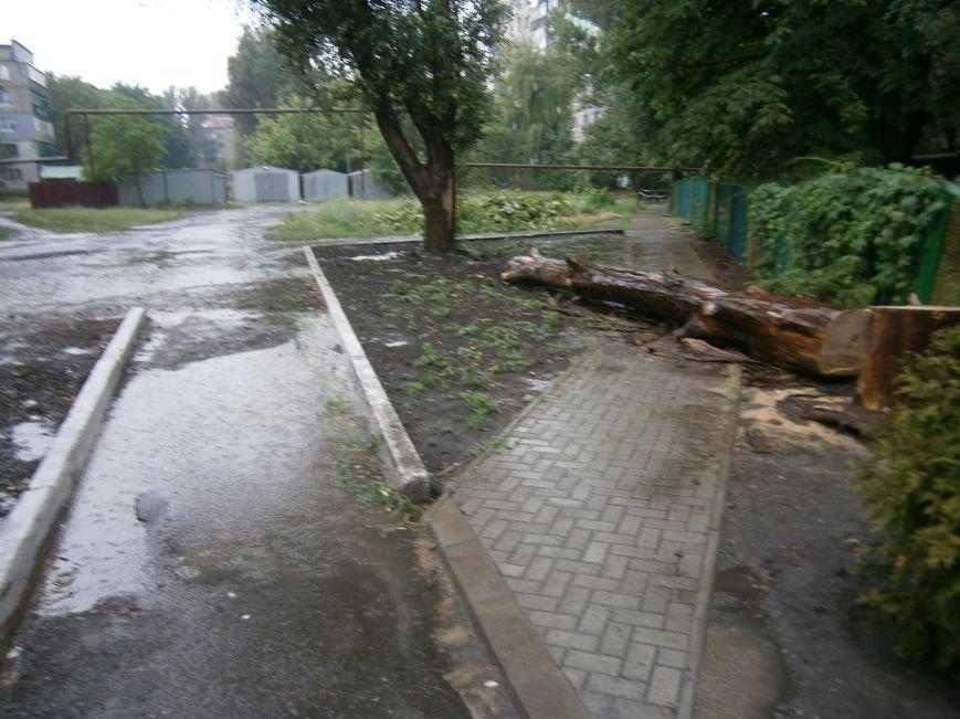«Омоложение» деревьев по-димитровски – беспощадное (фото) - фото 17