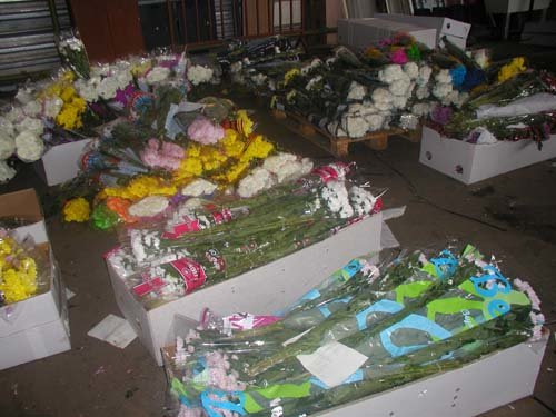 flowers2015-06-2