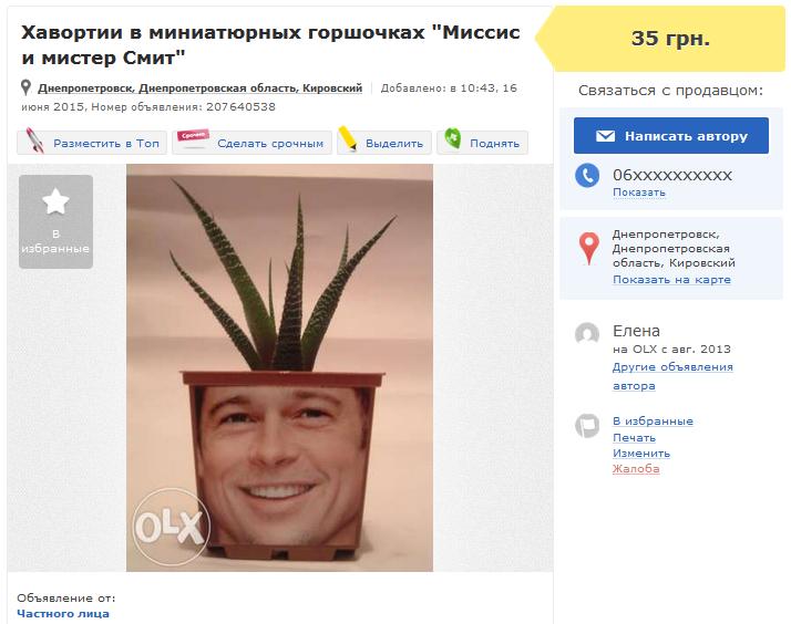 Хавортии_Днепр