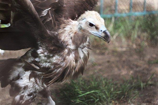 Как выживает луганский зоопарк (ФОТО, ВИДЕО) (фото) - фото 4