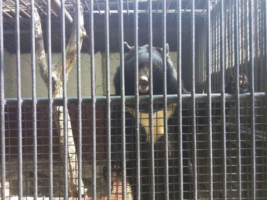 Как выживает луганский зоопарк (ФОТО, ВИДЕО) (фото) - фото 3