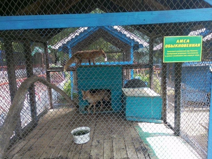 Как выживает луганский зоопарк (ФОТО, ВИДЕО) (фото) - фото 1
