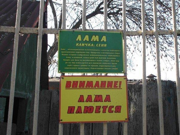 Как выживает луганский зоопарк (ФОТО, ВИДЕО) (фото) - фото 6