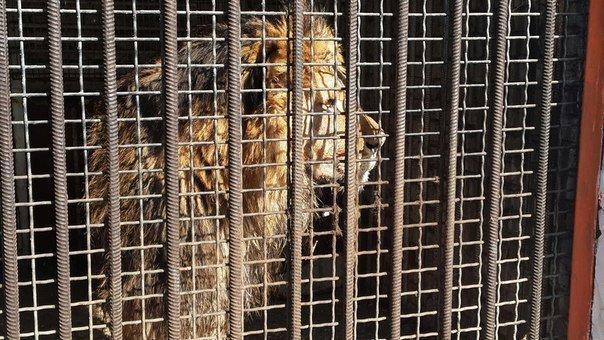 Как выживает луганский зоопарк (ФОТО, ВИДЕО) (фото) - фото 5