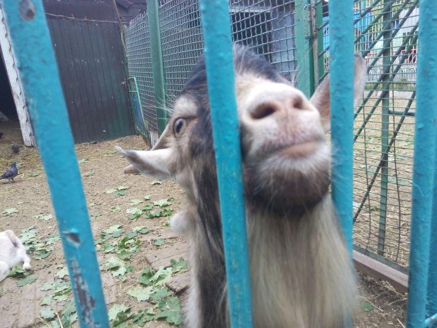 Как выживает луганский зоопарк (ФОТО, ВИДЕО) (фото) - фото 2