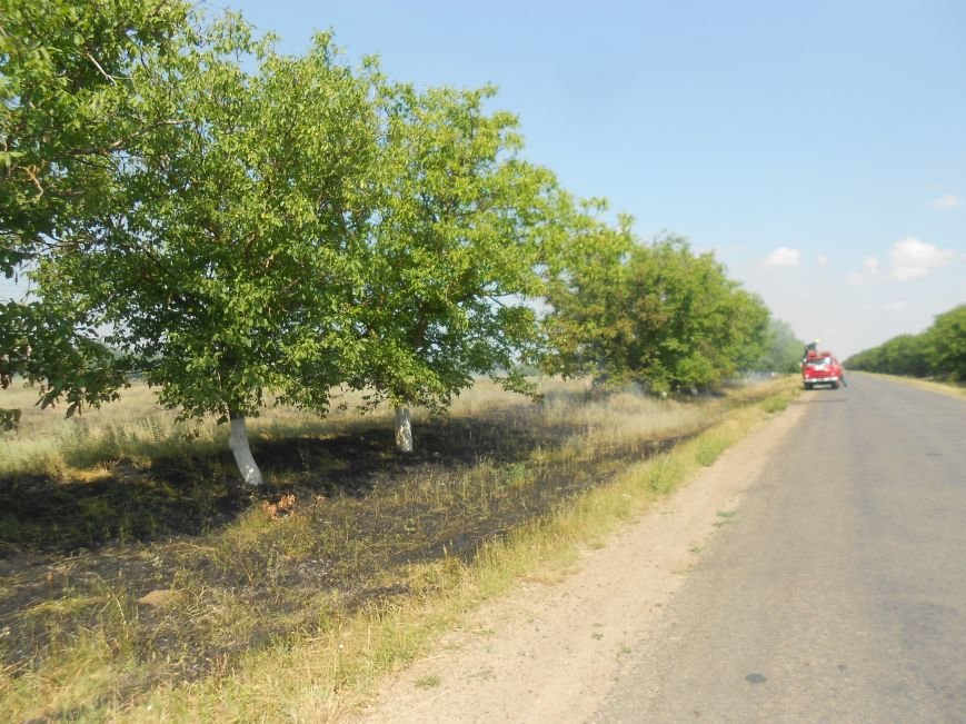 Под Одессой горят поля (ФОТО) (фото) - фото 1
