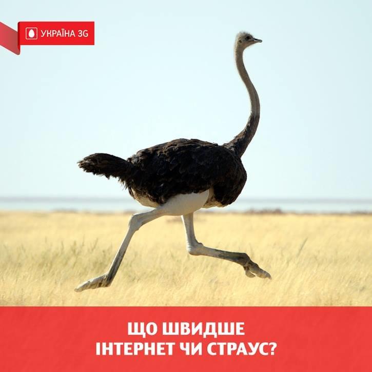 Страусы Януковича «разорвали» сеть. Мемы на интервью в рекламе (фото) (фото) - фото 1