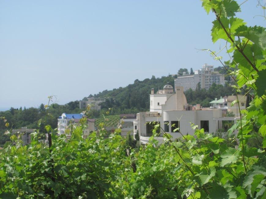 Ценные виноградники «Массандры» застраивают многоэтажками. Власти Крыма пообещали провести проверку (ФОТО), фото-1