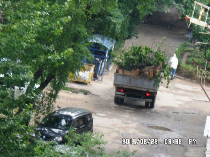У Львові на вулиці Пасічній зрізали тополі та яблуню із плодами (ФОТО), фото-4