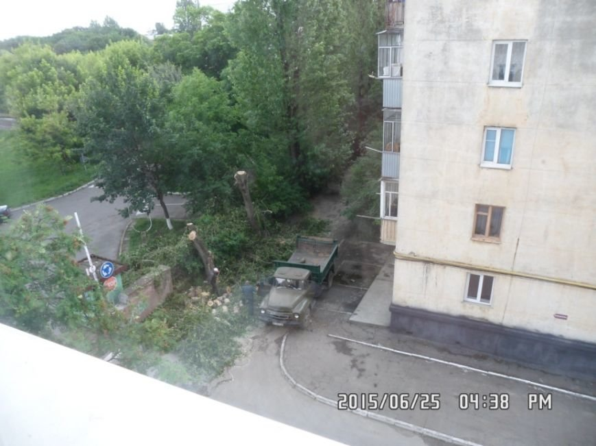 У Львові на вулиці Пасічній зрізали тополі та яблуню із плодами (ФОТО), фото-5